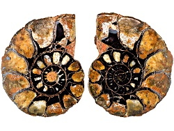 FSL003<br>Matched Pair Of Medium Moroccan Ammonite Fossils  Sizes Will Vary